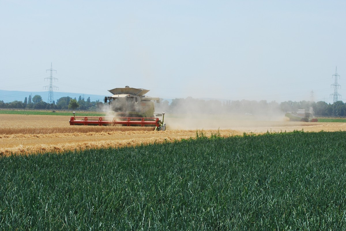 Claas Lexion 600 TT bei Petersau am 11.07.2015